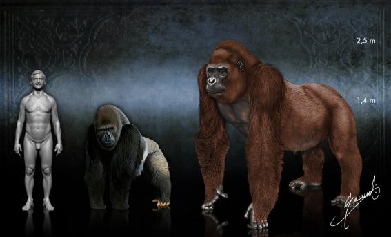 Gorila   Gigantopithecus BlackiGigantopithecus Giganteus