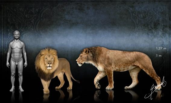 North american lion